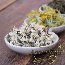Çuha Çiçegi  50 gr