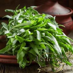 Tarhun - 50 gr