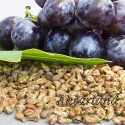 Üzüm Çekirdeği Tane - 200 gr